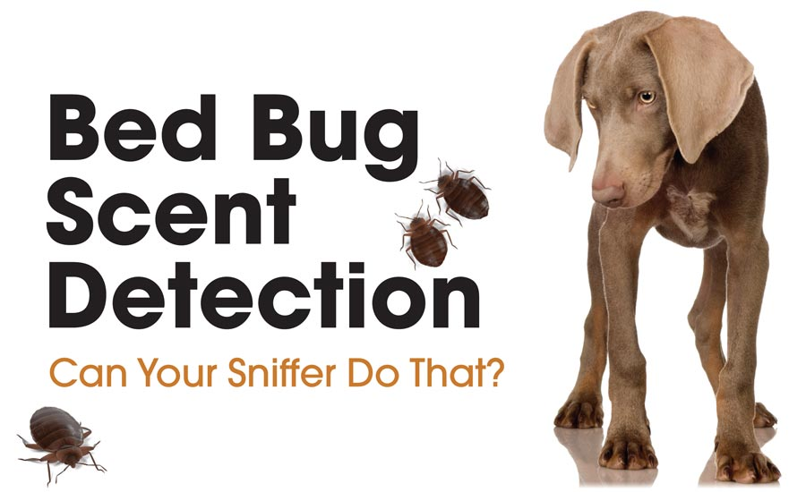 1-rr0917-walters-bed-bug-scent-detection