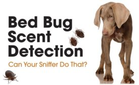 Bed Bug Scent Detection