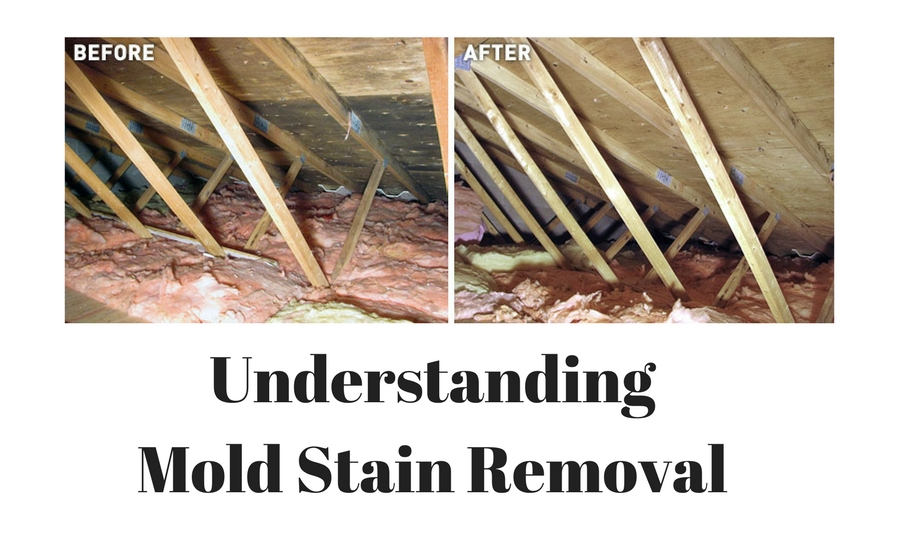 mold stain removal