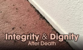 When bugs are present, carpet and porous materials where eggs could be laid should be removed.