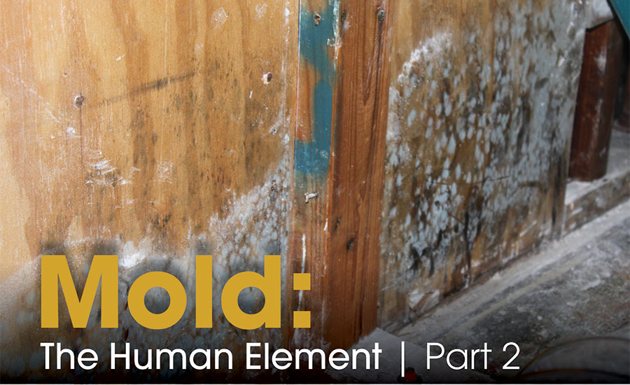 Mold: The Human Element