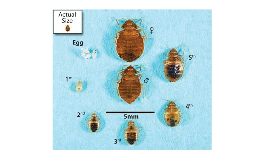 bed bugs breed profit