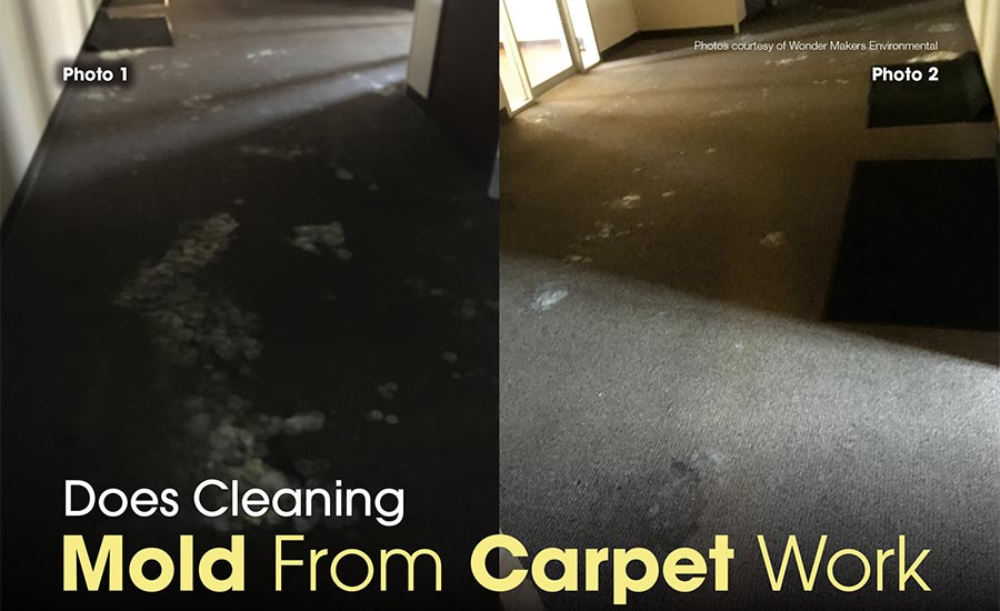 cleaning mold from carpet
