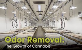 Cannabis odor removal