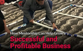 how mentorship can help grow a successful and profitable business