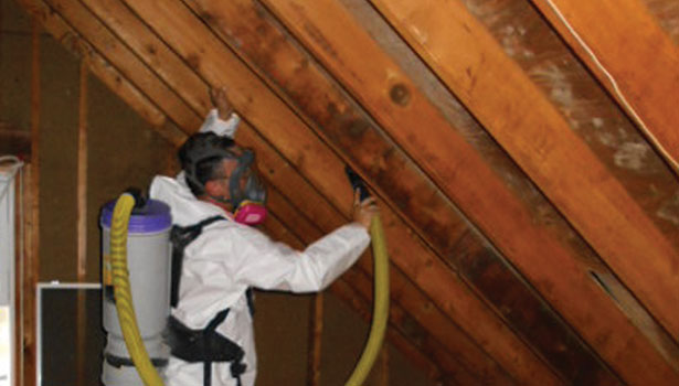 A New Way Of Attacking Mold In Attics 2014 02 03