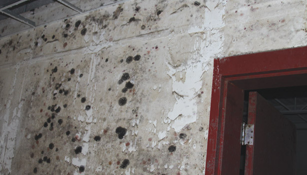 flood interior wall black mold