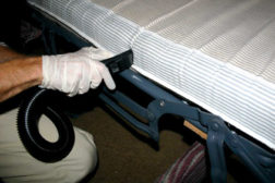bed bugs cleaning bed