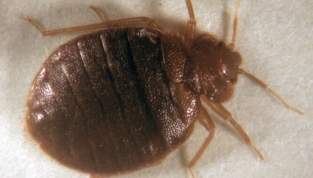 Average Cost Of Bed Bug Removal
