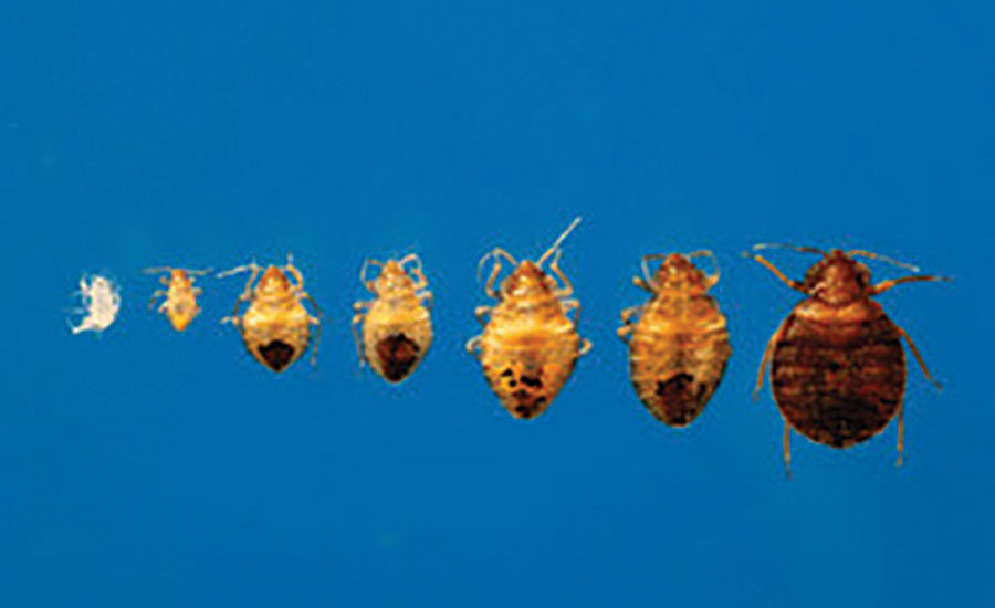 Hotels Without Bed Bugs